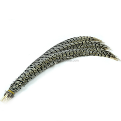 wholesale feather suppliers ringneck pheasant tail feathers lady amherst pheasant feathers for sale