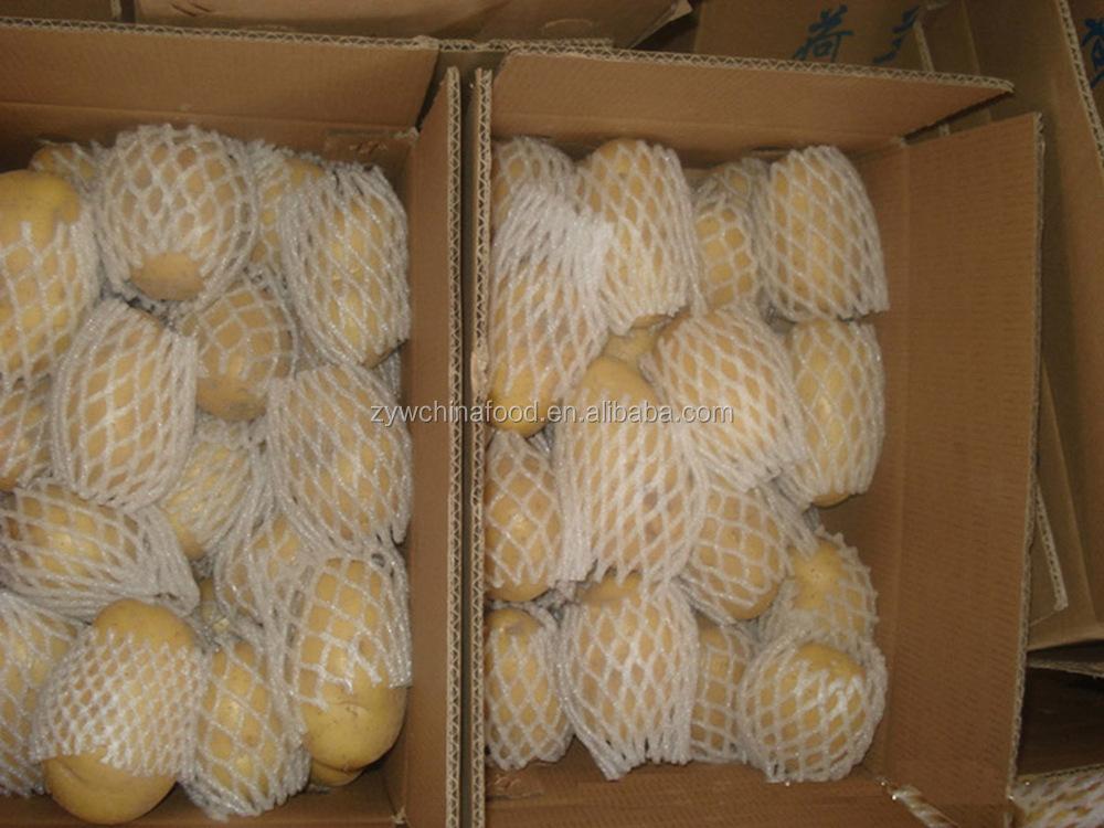 Chinese Fresh Potato / Sweet Potato / Holland Potato Exporter