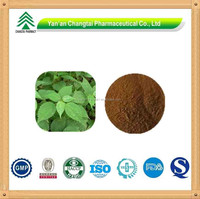 GMP Factory Supply High Quality Stinging Nettle Root Extract Nettle Powder