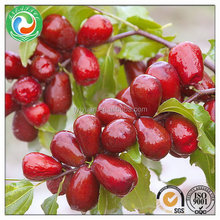 Alibaba china most popular dried red jujube fruit