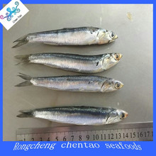 frozen best quality anchovy
