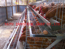 taiyu chicken cage egg poultry farm in ugandan