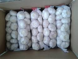 China Garlic Price ( hot sales, new arrival)