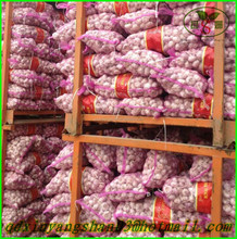 (NEW) 2015 China Fresh Garlic Enjoying High Reputation at Abroad