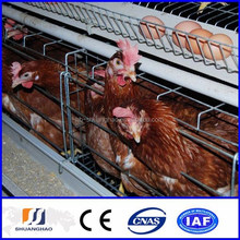 New !!! chicken layer cage / chicken laying cage