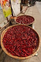 Fresh Chilli/ Red Chilli - BEST PRICE & NEW CROP