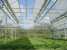 transparent plastic roofing sheet for green house