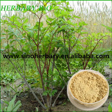 Total saponins of Astragalus 98%/astragalus extract astragalosides