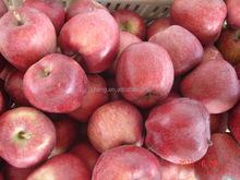 2015 good high quality huaniu apple in china