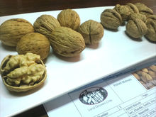 Natural Chilean Unshelled Walnuts