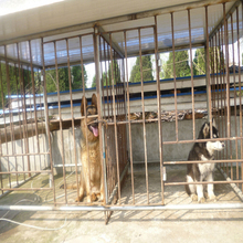 china wholesale Large outdoor chain link dog kennel / dog cages, welded wire dog kennel / pet enclosure