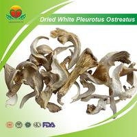 Competitive Price White Dried Pleurotus Ostreatus