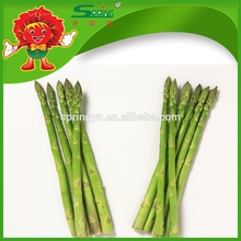 Hotsale espárrago fresco vegetales verdes orgánicos