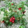 /product-gs/uva-ursi-extract-a-arbutin-bearberry-extract-alpha-arbutin-powder-60314288081.html