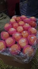 excellent quanlity 100% fresh red fuji apples
