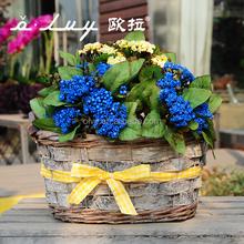 garden basket for European market