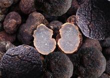 trufa tipo de producto y salvaje de la fuente de trufas frescas