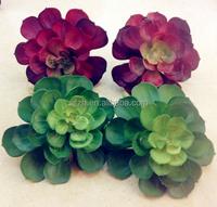 2015 Best quality flowering mini succulent plants bonsai