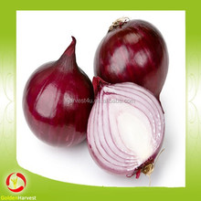 2015 New crop red onion with good quality