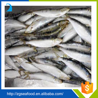 BQF Whole round Sardine Fish and sardine fishing net frozen sardine fish