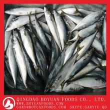 Frozen mackerel with good quality
