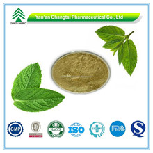 GMP Factory Supply Organic Wild mint leaf extract