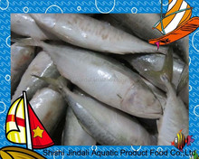 Frozen India mackerel fish Chinese seafood