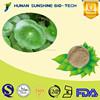 Made in China Centella asiatica P.E. powder HPLC 10%/20%/40% Asiaticoside
