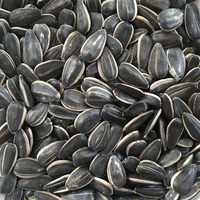 Round shape sunflower seeds 1121 Biggest Factory