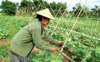 Myanmar Manpower Agency