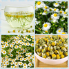 /product-gs/2015-free-shipping-best-quality-chamomile-flower-tea-60302093636.html