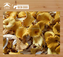 Dried Chanterelle mushroom with HACCP,GAP,ISO
