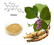 Natural. high quality. free sample. plant extract powder supplier, hot sale herbal product