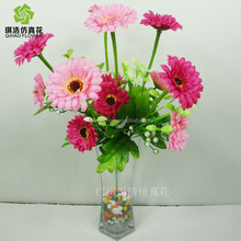 High quality Chrysanthemum cut flower with reasonable price and fast delivery on hot selling !!