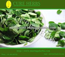 moringa olifera leaf for export