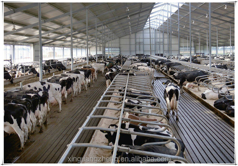 Steel Structure Dairy Cow Shed Turnkey Project Design