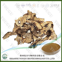 chinese GMP level manfuacturer supply black cohosh extract Triterpenoid powder