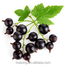 Black Currant Extract Powder with Factory Supply & Low Price