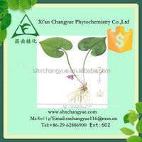 Top quality asarum extract powder