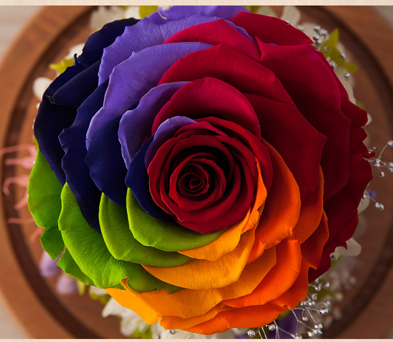 Rainbow Preserved Fresh Cut Rose Flower In Glass Dome From Kunming As Wedding Arrange