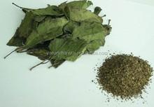 Hot Sale Organic Eucommia Leaf