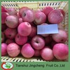 Fresh Qinguan apple market