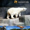 Mi - dino grande decorativo animales esculturas