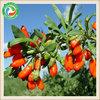 Top grade hot sale latest dried goji berry fruits