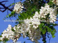 Sophora Japonica Flower Extract