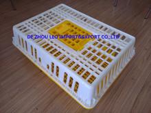 live chicken transport box/plastic broiler transport crate