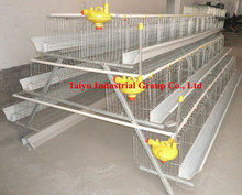 Taiyu automatic layer chicken control shed