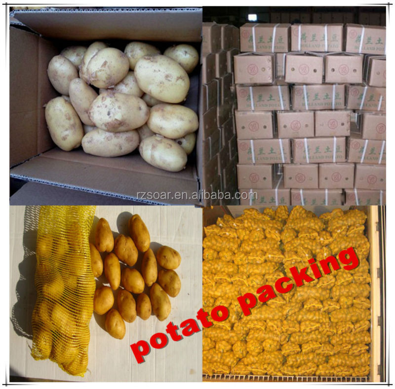 china export sweet fresh potato