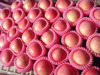 fresh fruit importers of Fuji apple in 2015