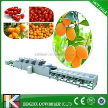 high capacity kiwi fruit/onion/potato grading machine for sale
